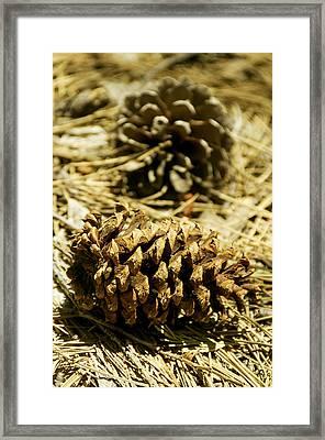 Pine Cones In The Valley-yosemite Series 30 Framed Print by David Allen Pierson