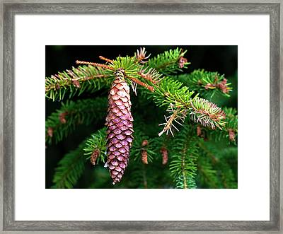 Framed Print featuring the photograph Pine by Charles Lupica
