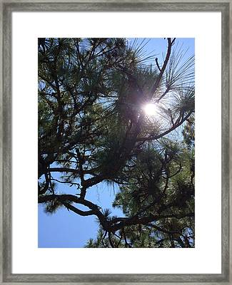 Pine Face With Sun Eye Framed Print