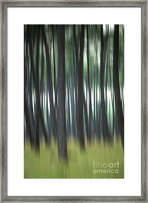 Pine Forest. Blurred Framed Print by Bernard Jaubert