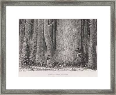 Pine Forest Framed Print by British Library