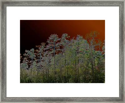 Pine Forest Framed Print by Connie Fox