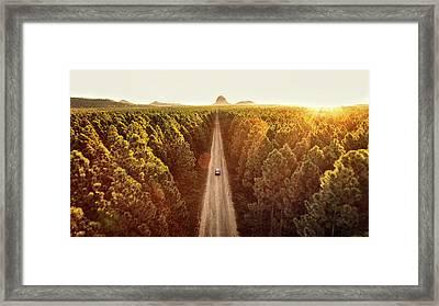 Pine Forest Framed Print by Flyfilm.tv