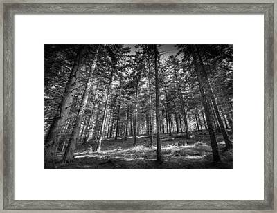 Framed Print featuring the photograph Pine Forest by Gary Gillette