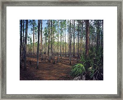 Pine Forest II. Split Oak. Framed Print