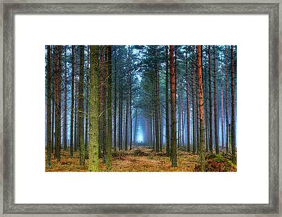 Pine Forest In Morning Fog Framed Print by EXparte SE