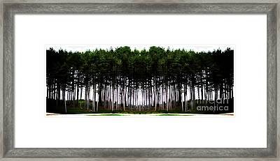 Pine Forest Framed Print