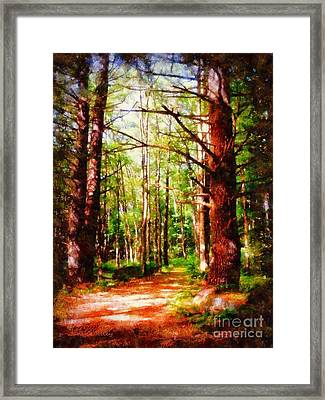 Pine Forest Path Framed Print