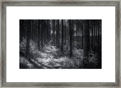 Pine Grove Framed Print by Scott Norris