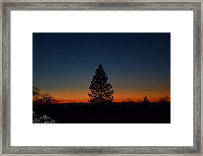 Pine In The Prism Framed Print