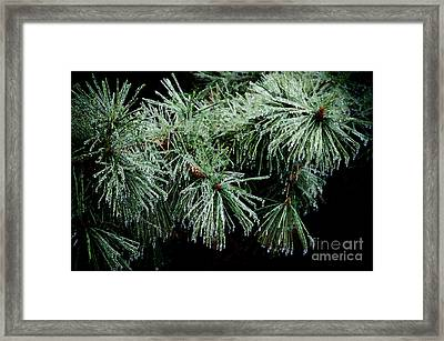 Pine Needles In Ice Framed Print by Betty LaRue