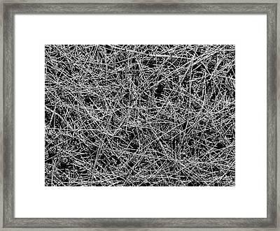 Pine Needles Framed Print by Michael Durst