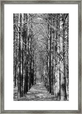 Pine Plantation Framed Print by Betty Northcutt