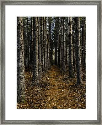 Pine Row Framed Print