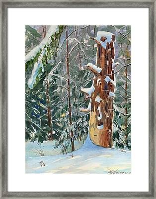 Pine Sentinel Framed Print