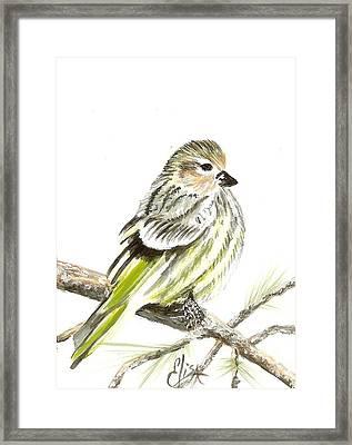 Pine Siskin Finch Framed Print by Elisa Gabrielli