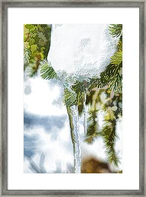 Pine Snow And Ice Framed Print
