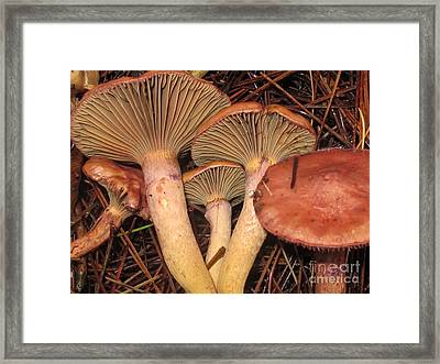 Pine Spikes Framed Print