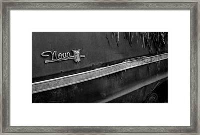 Pine Straw Nova In Black And White Framed Print