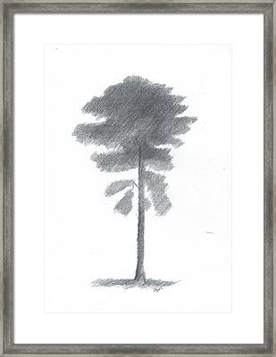 Pine Tree Drawing Number Four Framed Print by Alan Daysh