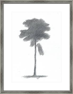 Pine Tree Drawing Number Three Framed Print by Alan Daysh