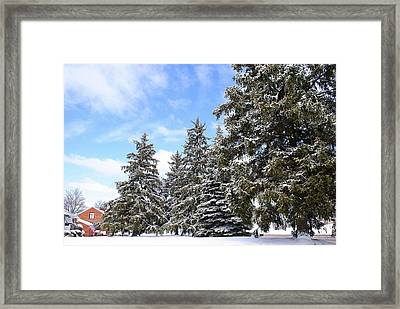 Pine Tree Haven Framed Print by Frozen in Time Fine Art Photography
