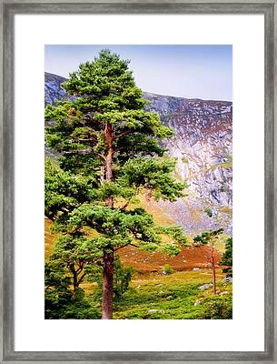 Pine Tree In Wicklow Hills. Ireland Framed Print by Jenny Rainbow