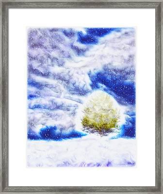 Pine Tree In Winter Framed Print