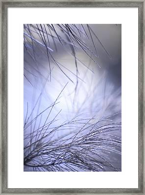 Pine Tree Needles Framed Print by Jenny Rainbow