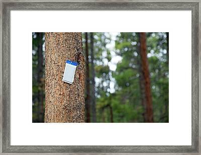 Pine Tree Pest Control Framed Print