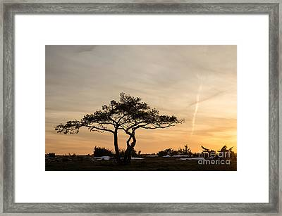 Framed Print featuring the photograph Pine Tree Portrait by Kennerth and Birgitta Kullman