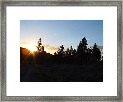 Pine Tree Sunset Framed Print by Mark Russell