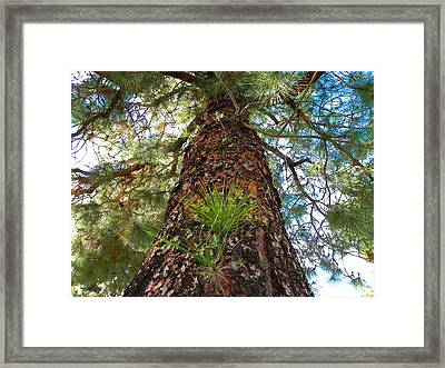 Pine Tree Tower Framed Print