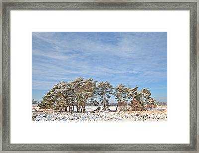 Pine Trees At Edge Of Frozen Lake Framed Print by Dirk Ercken