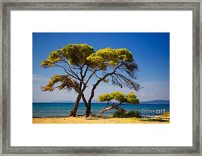Pine Trees By The Beach Framed Print