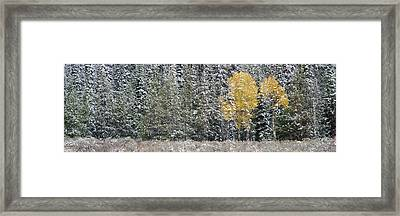 Pine Trees In A Forest, Grand Teton Framed Print by Panoramic Images