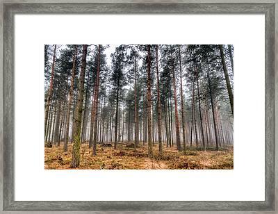 Pine Trees In Morning Fog Framed Print by EXparte SE