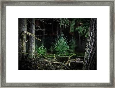 Pine Trees New Life Framed Print
