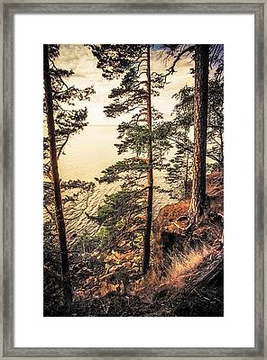 Pine Trees Of Holy Island Framed Print by Jenny Rainbow