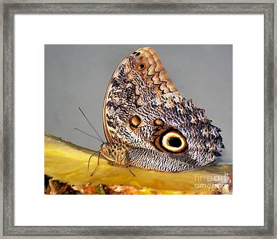 Pineapple Butterfly Framed Print by Leslie Cruz