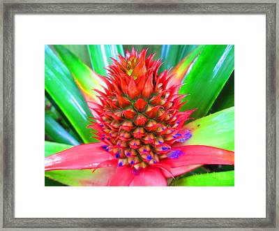 Pineapple Express Framed Print by Scarekrowe Karratti