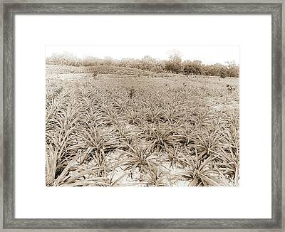 Pineapple Field At Eden, Jackson, William Henry, 1843-1942 Framed Print by Litz Collection