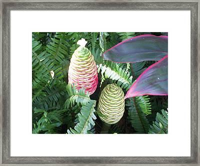 Pineapple Ginger Framed Print by Belinda Lee