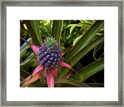 Pineapple Royal Framed Print