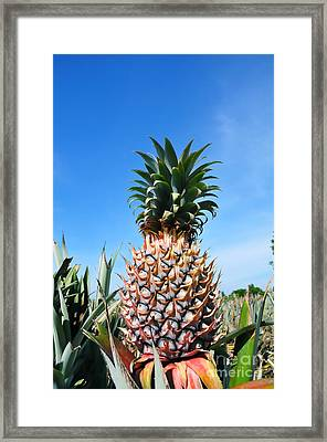 Pineapple Framed Print by William Voon