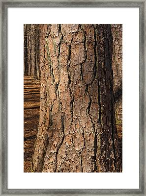 Pinebark Framed Print