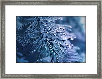 Pinecicles Framed Print by Michaela Preston