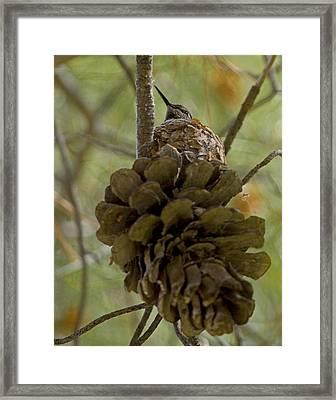 Pinecone Nest Framed Print