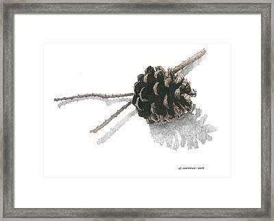 Pinecone Framed Print by Paul Shafranski