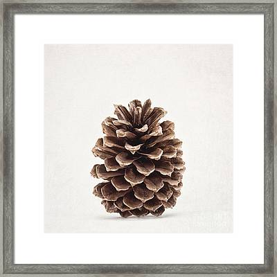 Pinecone Pose 2 Framed Print by Alison Sherrow